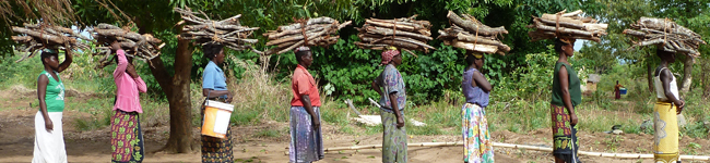Firewood-for-cooking-Malawi-Africa