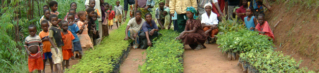 Tree-planting-Malawi-Africa-1