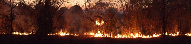 Bush-burning-Malawi-Africa