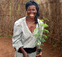 RIPPLE Africa has established a number of community tree planting projects in Nkhata Bay District, Malawi. To date, over three million trees have been planted in Malawi