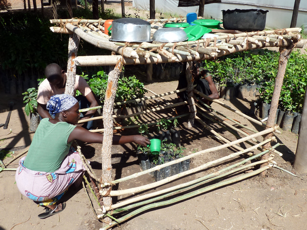 Every household grows 25 trees for fuelwood and 10 fruit trees