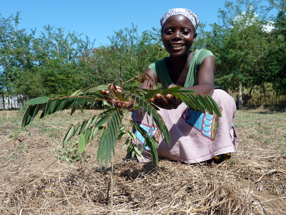 The household woodlot for 25 trees is 10 metres by 10 metres, and this will help to provide sustainable fuelwood