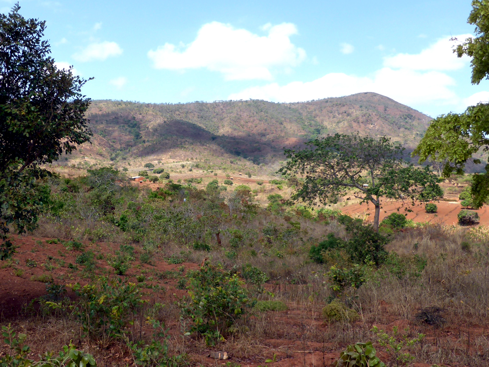 This is central Malawi where the forests have all been cut down and only a few small trees now grow