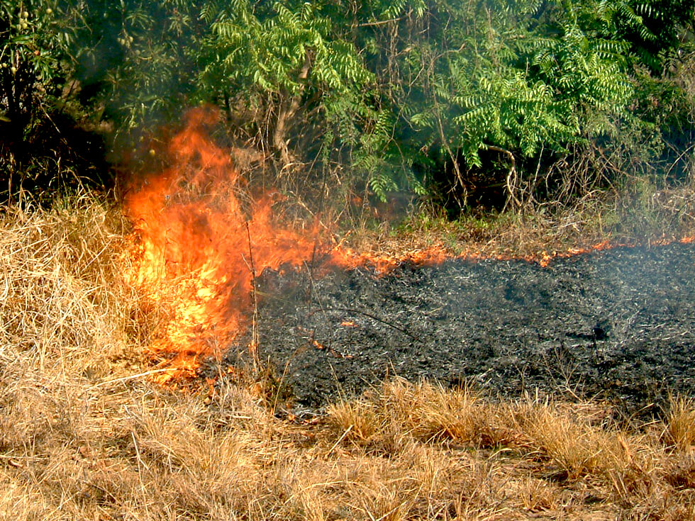 In the dry season, people prefer to burn their fields to prepare them for planting crops in December, leaving the soil without organic materials