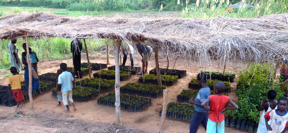 A well run community tree nursery growing about 4,000 tree seedlings