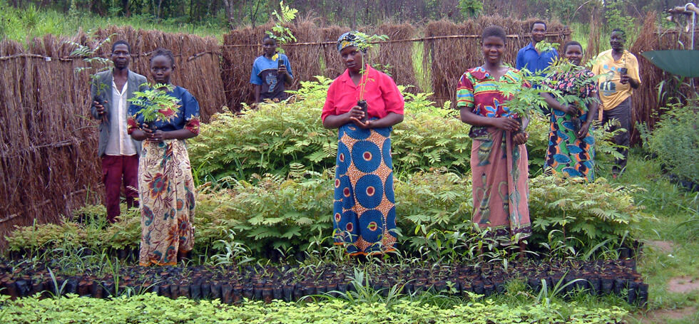 Club members manage and maintain the tree seedlings ready for planting out in the rainy season