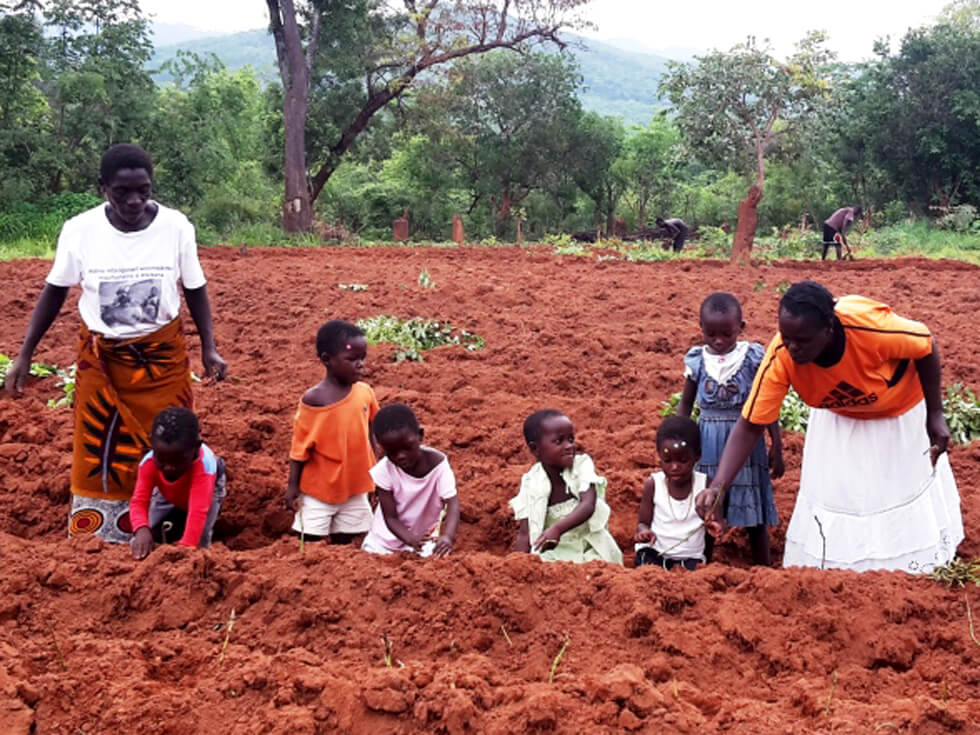All pre-school teachers grow sweet potatoes for the children