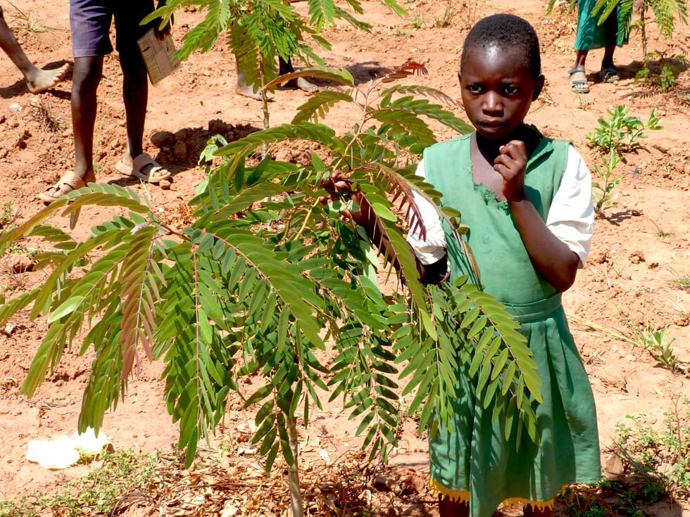 At Makwalakwata Primary School, the pupils have planted over 2,000 trees