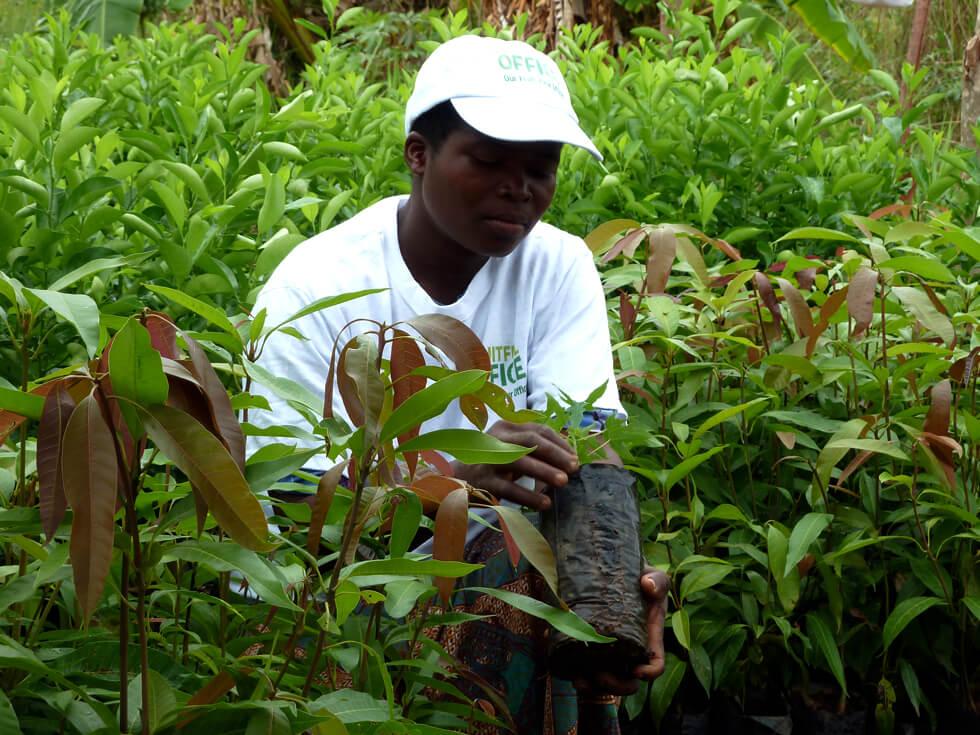A RIPPLE Africa community fruit tree nursery