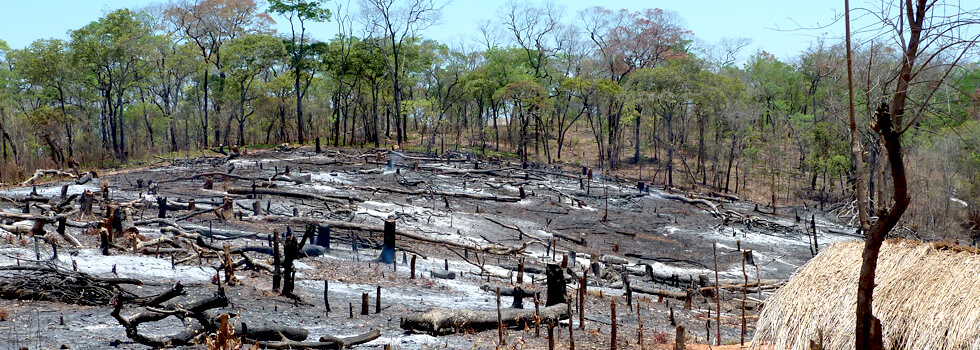 Deforestation in Africa: The farmer who cut down these trees is now working with his Conservation Committee because he appreciates the benefit of preserving the forests