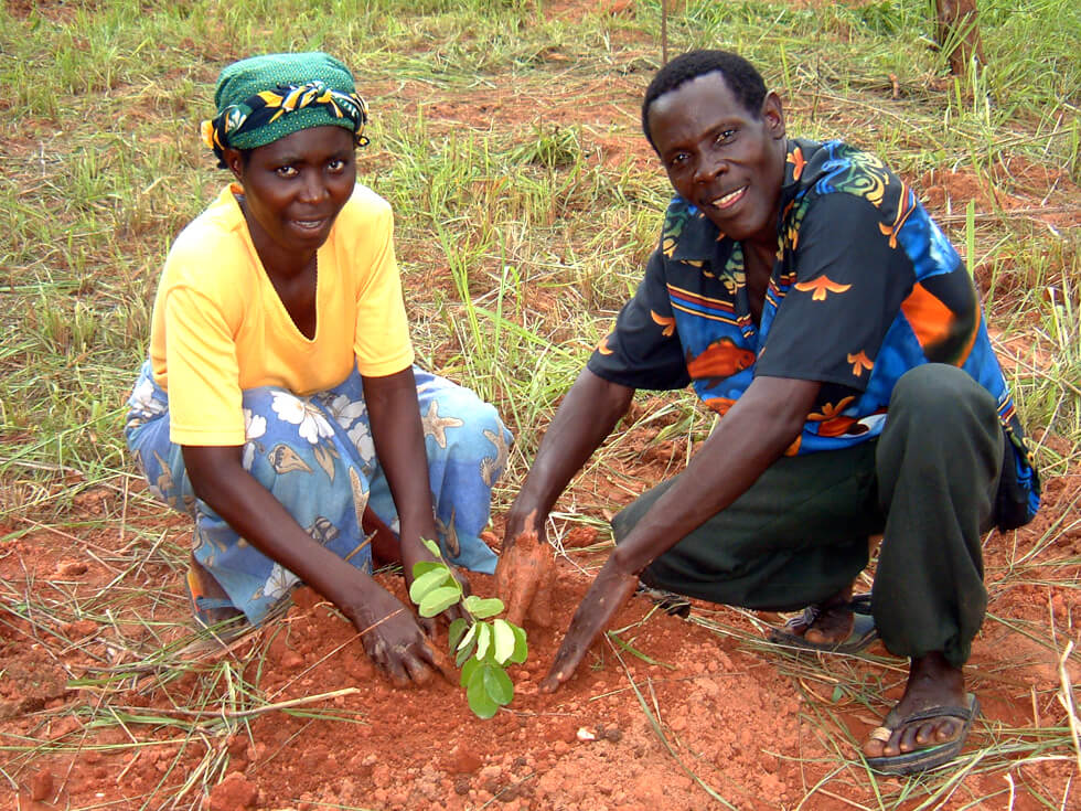Planting out the tree seedlings in December/January, the beginning of the rainy season