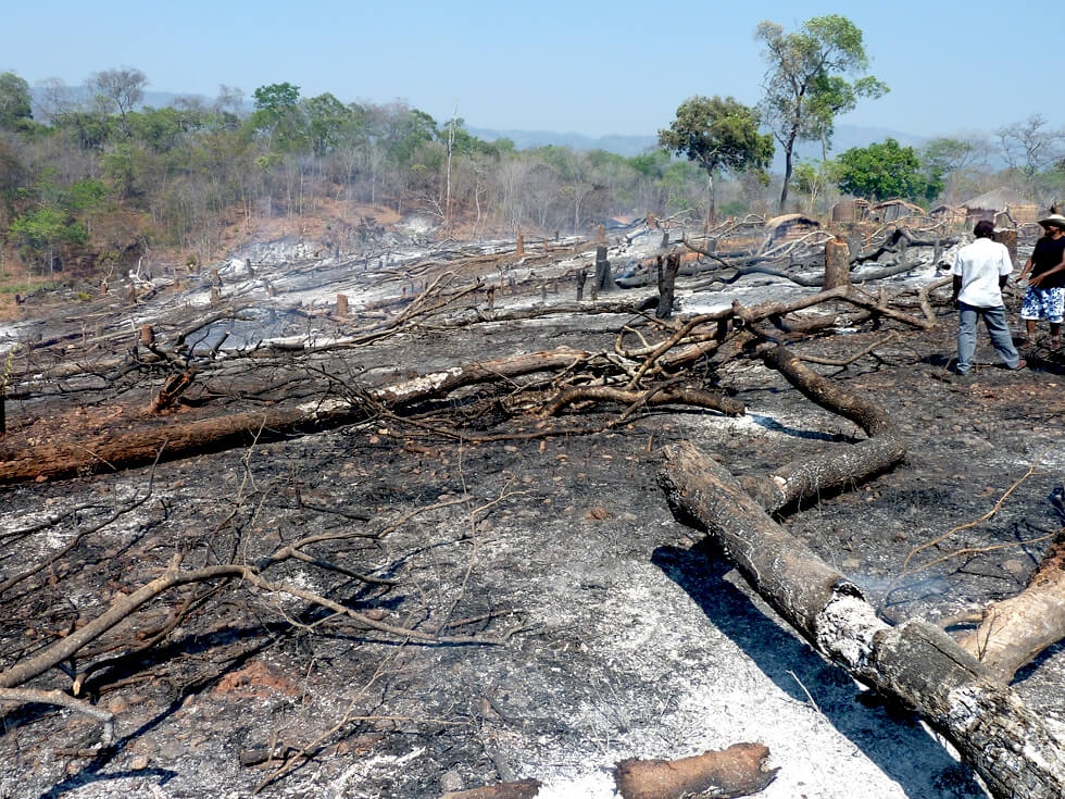 One farmer cut down these trees and burnt them where they fell