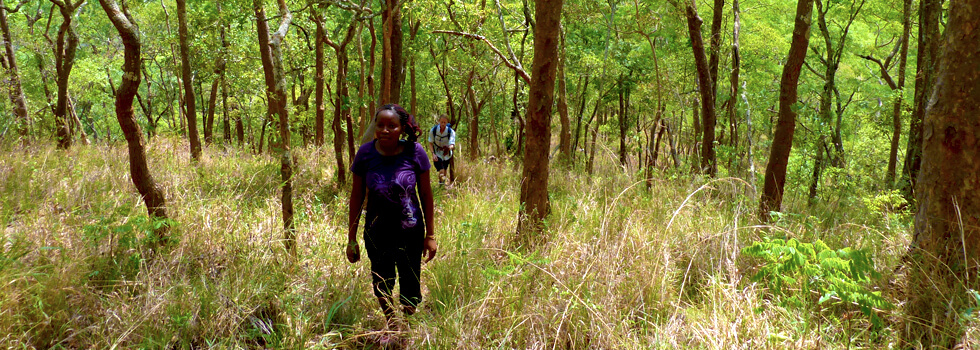 RIPPLE Africa is working with a large number of chiefs and communities to conserve over 200 km² of forest