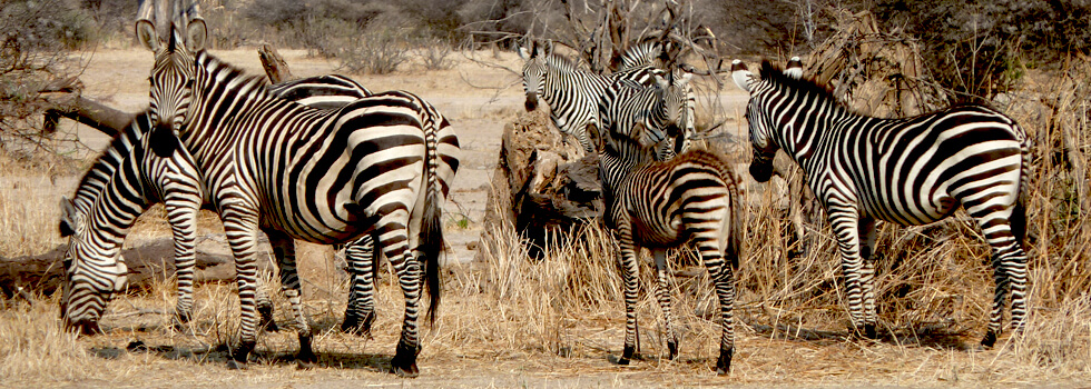 Make the most of travelling within Malawi and adjacent countries like Zambia and Tanzania — going on a safari is a must