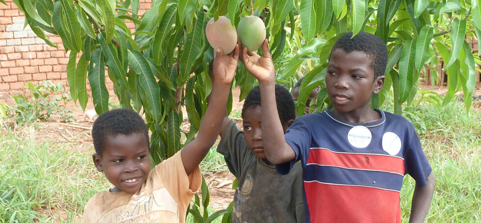 RIPPLE Africa is helping communities to grow fruit trees to improve nutrition
