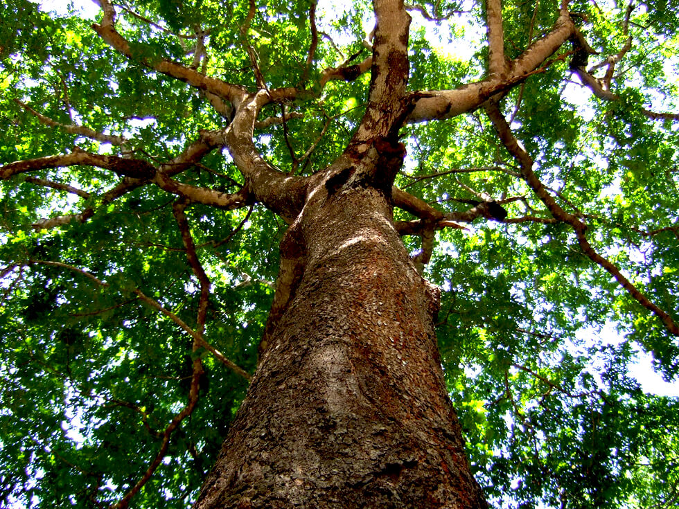 trees-in-malawi