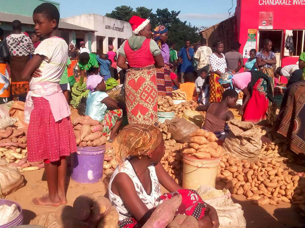 Surplus sweet potatoes can be sold at the market