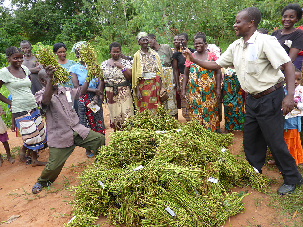 Farmers excited about receiving the vines