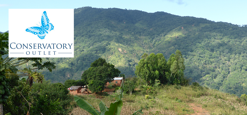 Corporate Partnerships: Conservatory Outlet are helping RIPPLE Africa to help communities and individuals to plant trees and conserve the forests