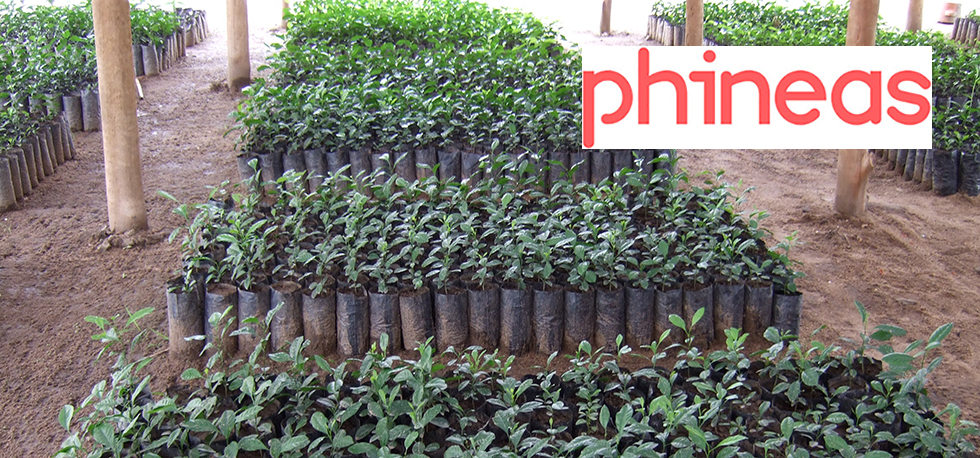 Corporate Partnerships: Phineas Group are contributing to our Tree Planting and Deforestation projects