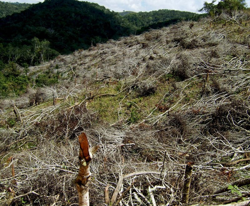 Deforestation in Malawi is one of the environmental challenges