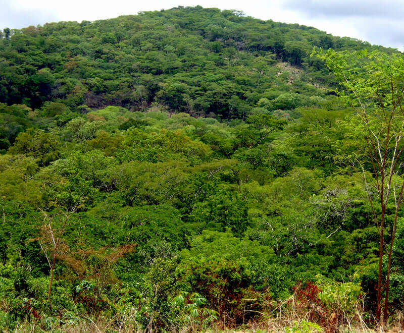 Protected forested hill in Malawi