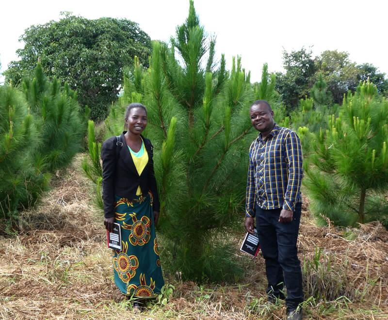 pine tree planting, Ripple Africa, Malawi