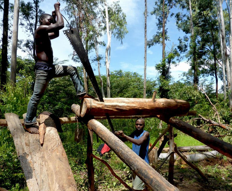 Demand for timber adds to the environmental challenges in Malawi