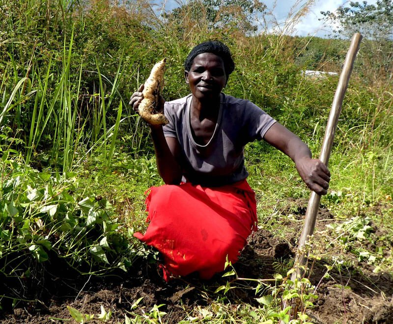 A HIV group member carries out sweet potato farming in Malawi