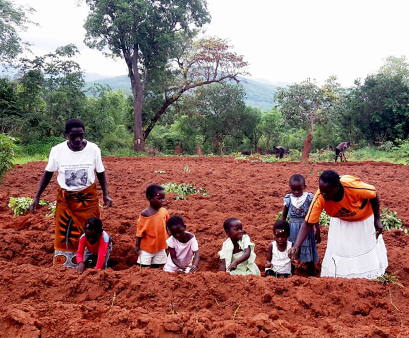 sweet potato planting preschool ripple africa