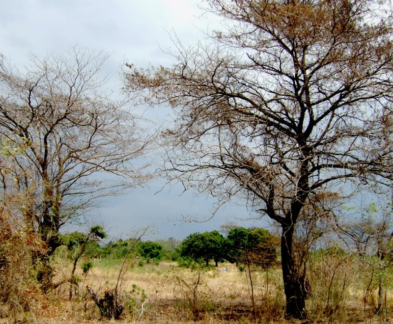 A countryside scene in Malawi during the dry season
