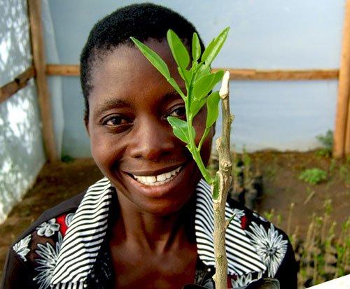 Orange and lemon tree budding in Africa