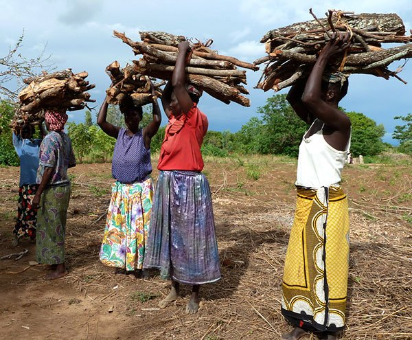 Firewood collecting in Malawi