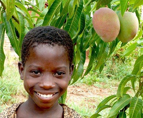 Mango tree in Africa