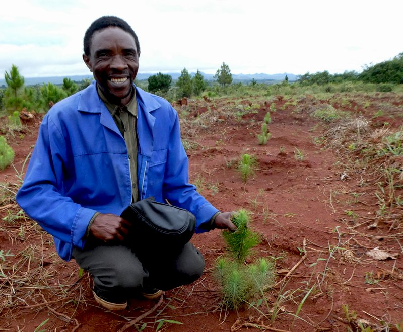 A smiling tree planting farmers sits in his tree plantation in Africa