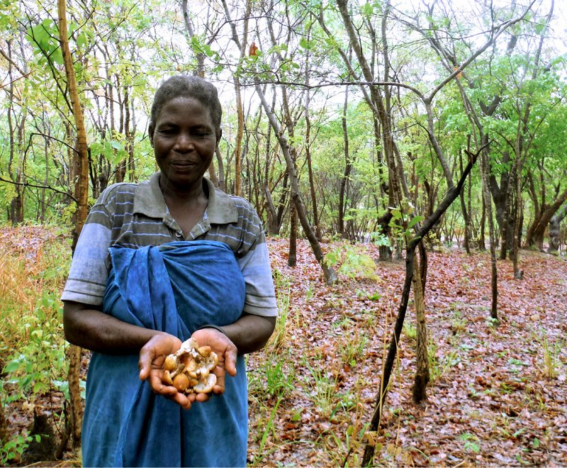 A proud forest conservation committee member with mushrooms she has collected in Malawi