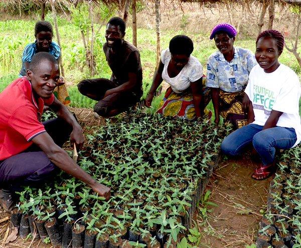 Tree planting nursery Malawi Africa