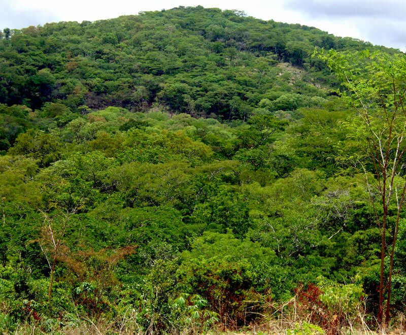 Overcoming environmental challenges in Malawi by protecting forests