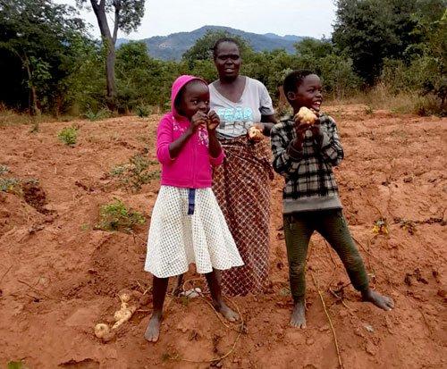 Sweet potatoes for children's health