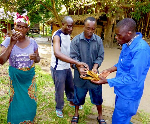 The Mwaya team tasting the honey