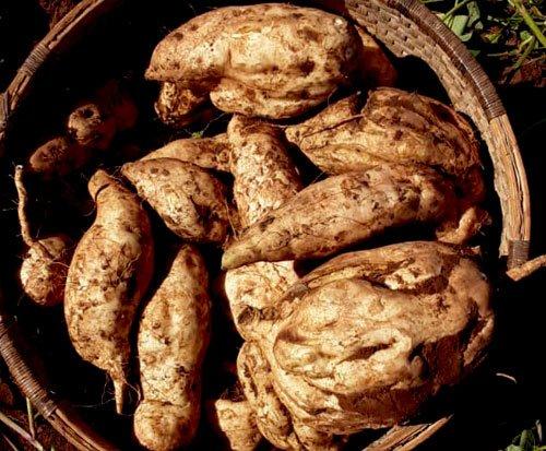 Sweet potato farming supports a community