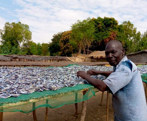 Malawian fisherman stands by his fish caught in Lake Malawi