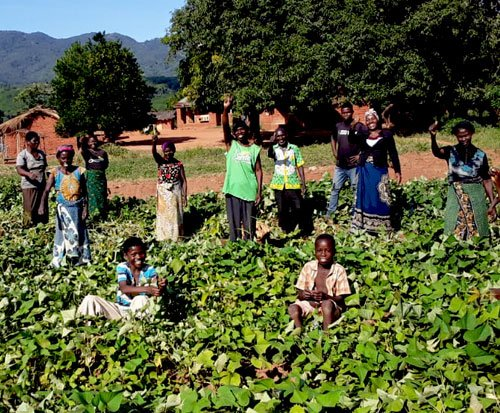 Community farmers working together to plant and harvest in Africa